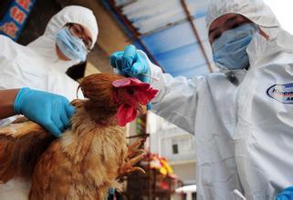 吃哪些食物可以预防禽流感