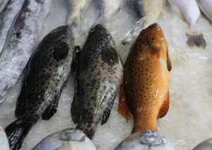 海鱼和淡水鱼有什么区别