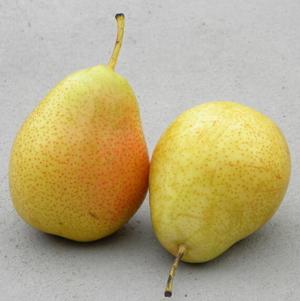 孕妇吃梨的注意事项