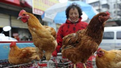 预防禽流感需要注意什么