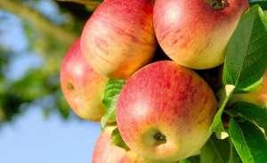 吃苹果好处和坏处