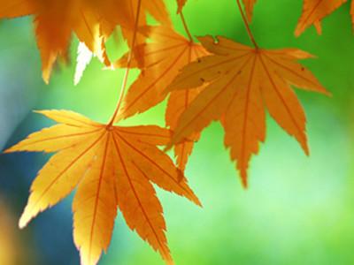 秋季进补食材是什么