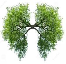 肺纤维化应该如何预防