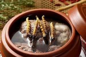 冬虫夏草怎么吃最好