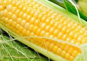 玉米的营养有那些呢