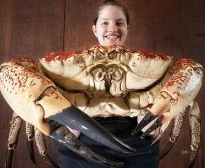 螃蟹的吃法推荐